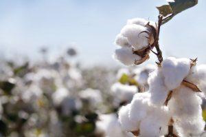 Coton Pima - Fine Alpaca fine laine et coton du Pérou